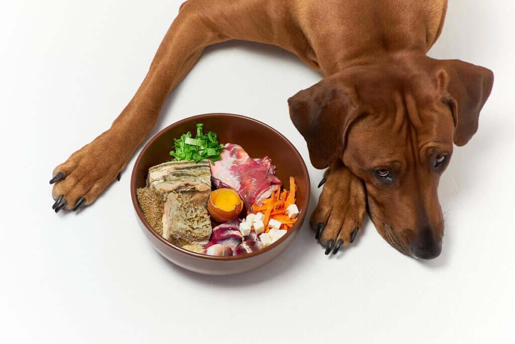 Les régimes alimentaires pour les problèmes rénaux des chiens