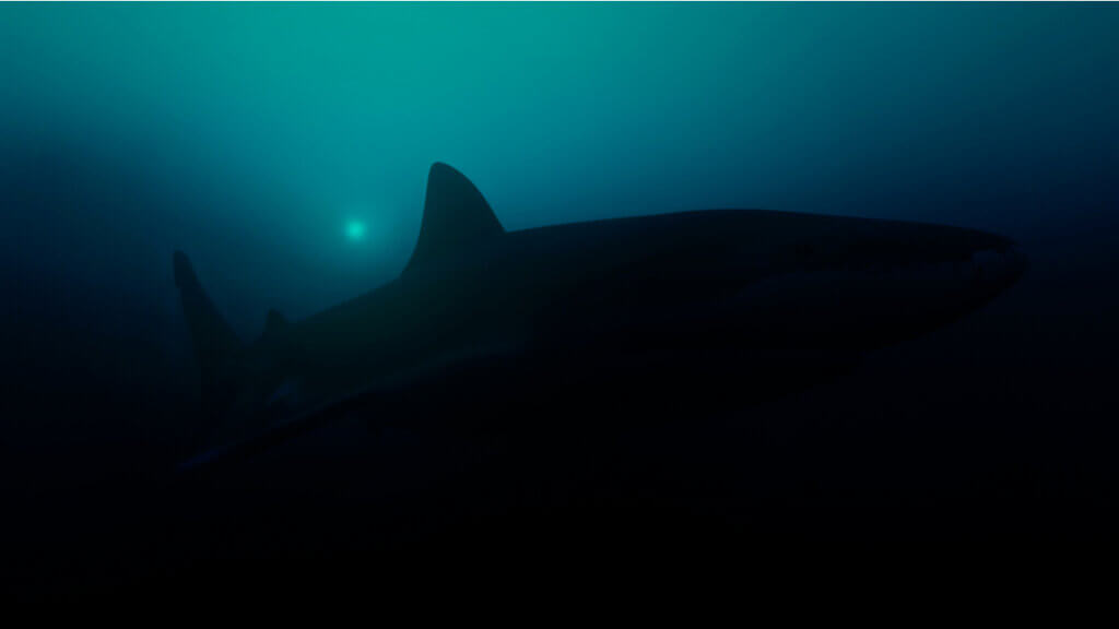 Ils trouvent le plus grand requin lumineux du monde