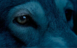 Un chien bleu.