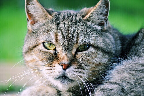 Vous n'aimez pas les chats ? Vous ne les connaissez pas !