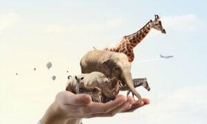 5 actions qui contribuent à la protection des animaux et de la planète