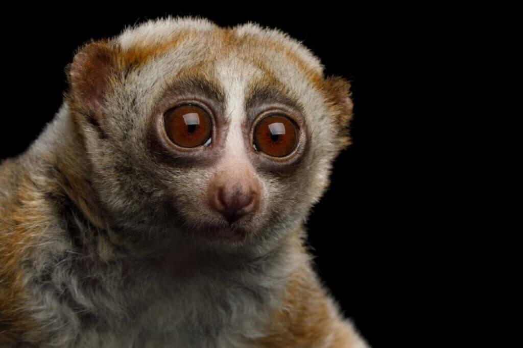 5 curiosités sur les mammifères