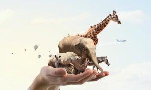 Des animaux sur une main.