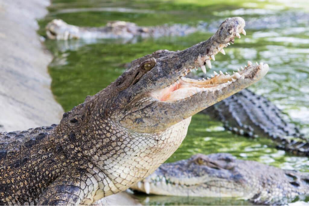 6 faits amusants sur les crocodiles
