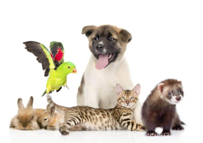 La liste positive des animaux de compagnie en Espagne : en quoi consiste-t-elle?