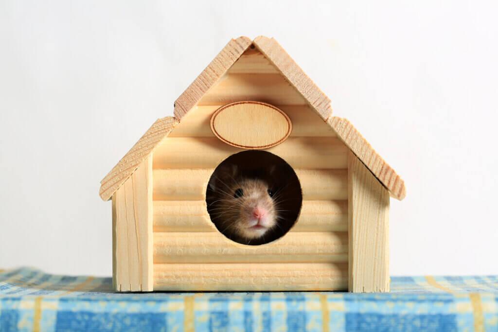 Maisons pour hamsters : types et recommandations