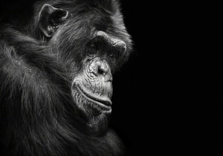 6 animaux qui peuvent souffrir de dépression