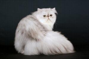 Un chat qui souffre de dépression.