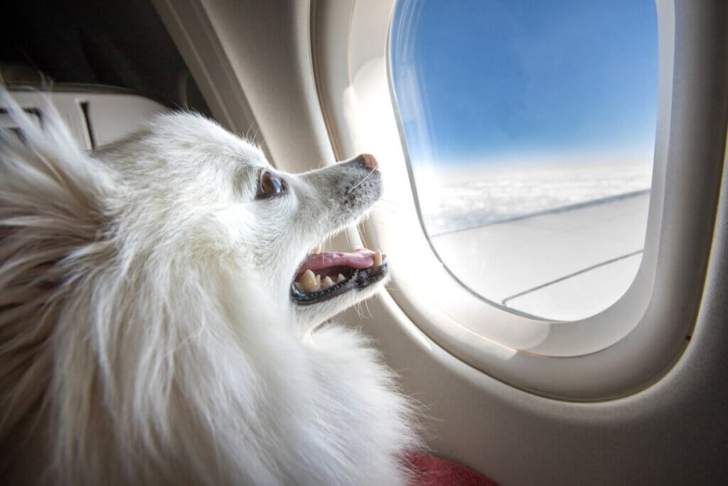 Quelles races de chiens ne peuvent pas voyager en avion ?