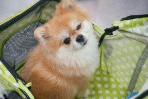 Garderie pour chiens : avantages et inconvénients