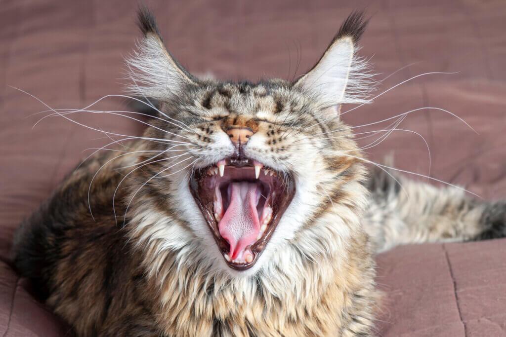 4 mythes sur les moustaches du chat