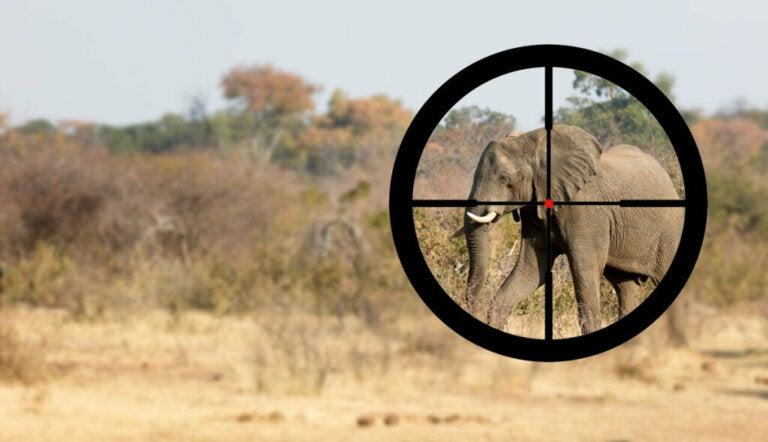 Pourquoi certains éléphants ont des défenses et d'autres pas ?