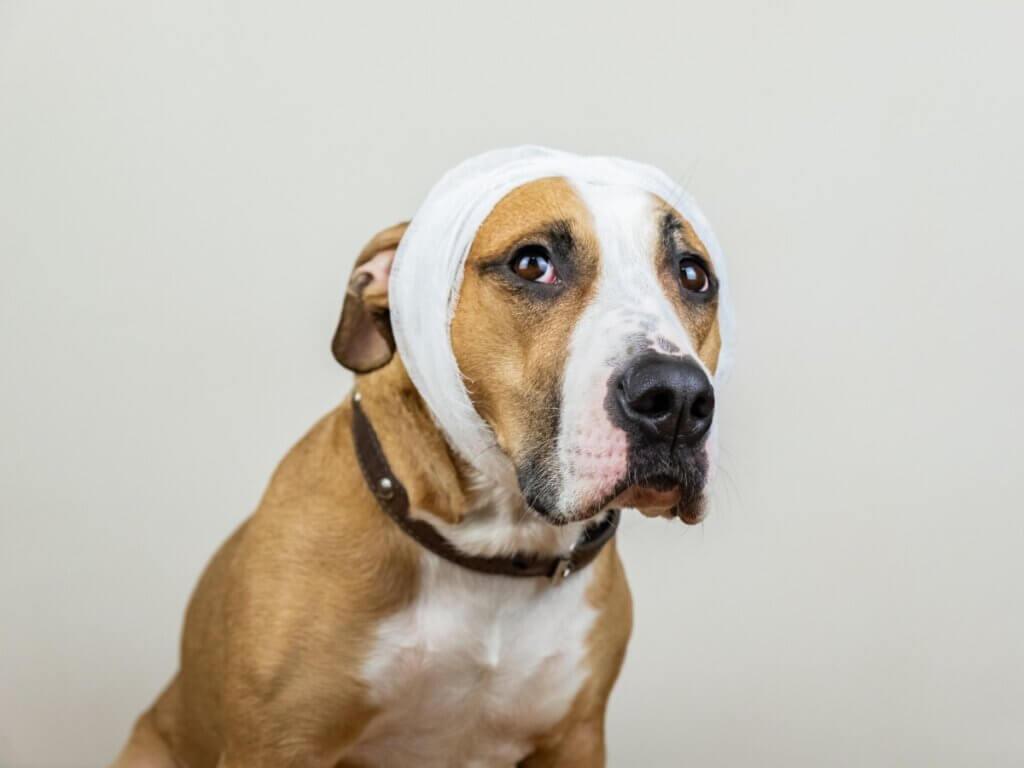 AVC chez le chien : causes, symptômes et traitement