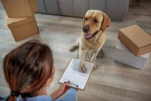Le gouvernement espagnol crée une carte d'identité obligatoire pour les animaux domestiques
