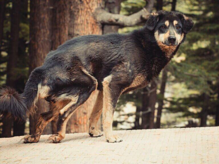 Comment nourrir et soigner un chien qui souffre de malnutrition ?