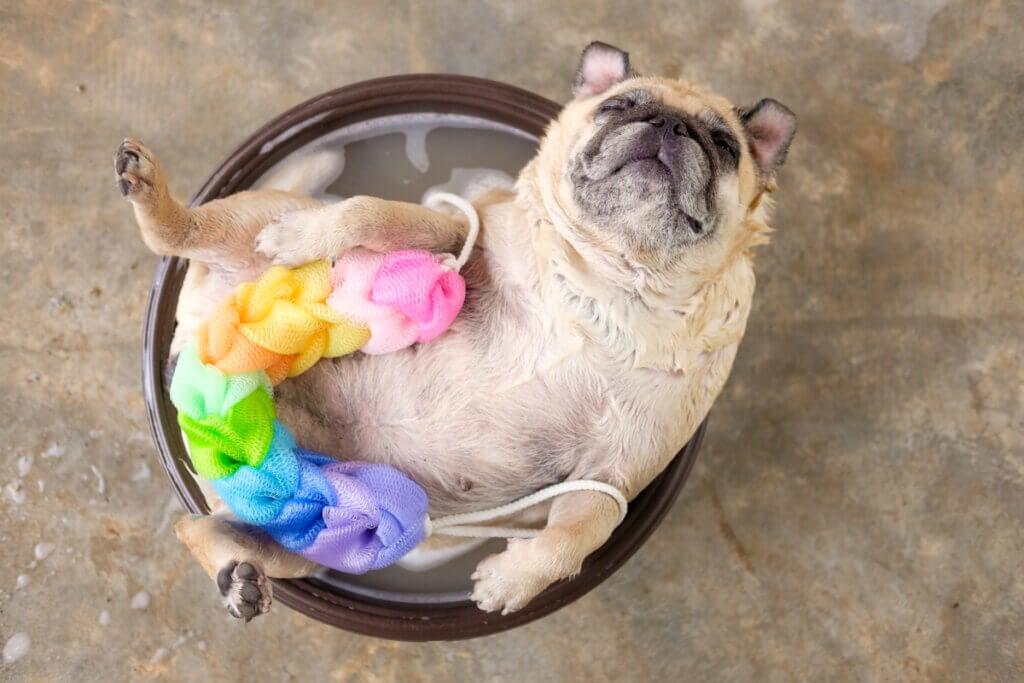 Est-il bon de laver un chien avec un savon neutre ?