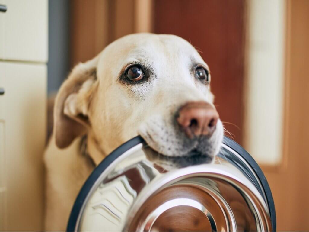 Les chiens peuvent-ils manger du kiwi ?