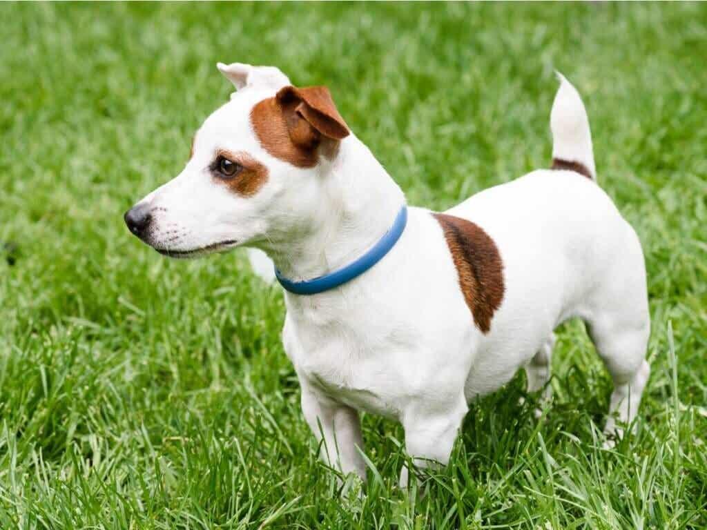 Collier antiparasitaire pour chien : lequel choisir ?