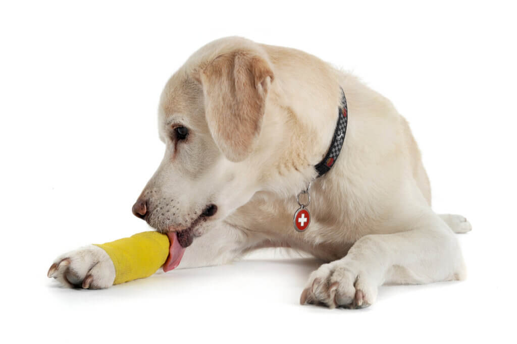 Entorse chez le chien : causes, symptômes et traitement