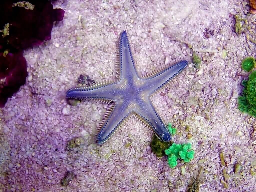 Comment les étoiles de mer respirent-elles ?