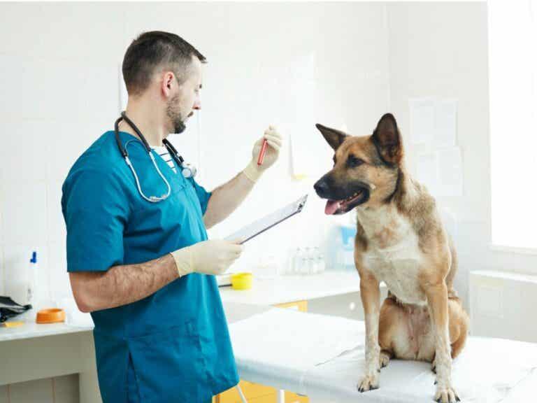 Hémodialyse chez le chien et le chat : tout ce qu'il faut savoir