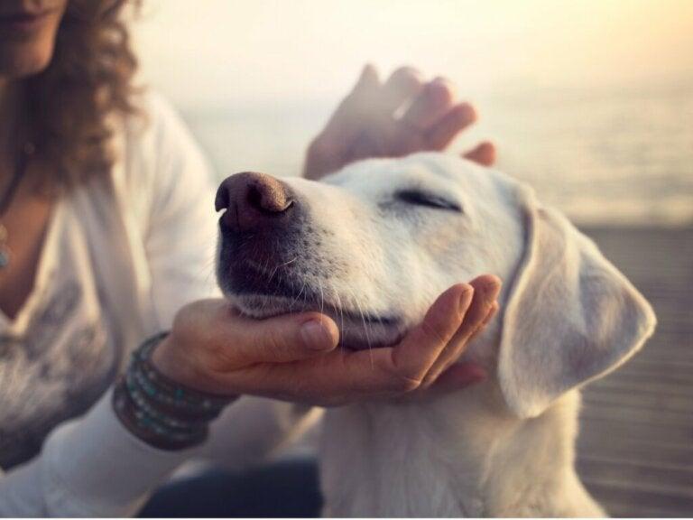 Charbon actif pour chien : utilisations et dosage