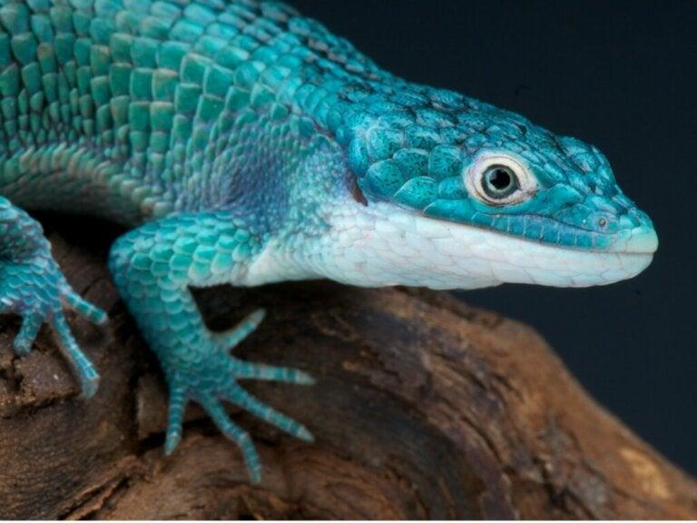 13 reptiles menacés
