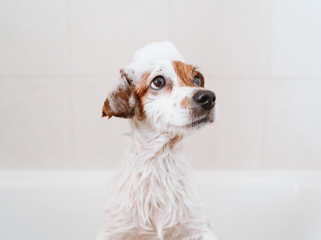 Premier bain d'un chiot : quand et comment ?
