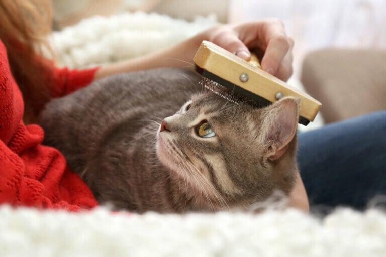 Comment démêler les nœuds dans les poils de votre chat ?