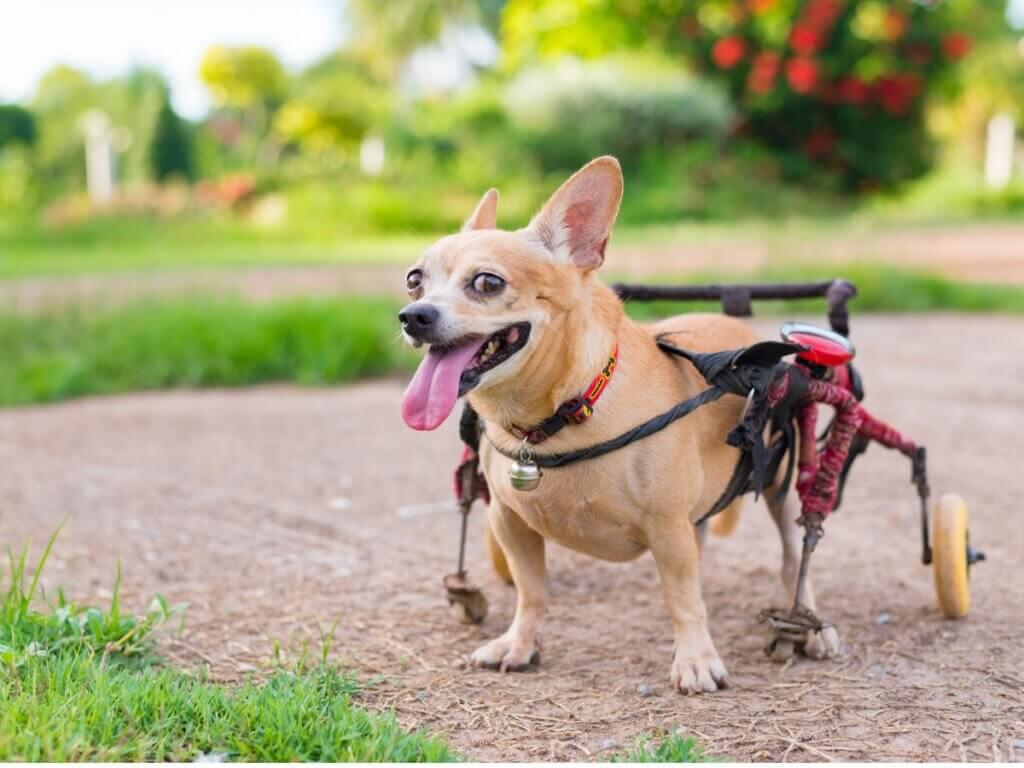 Orthopédie pour chiens : tout ce que vous devez savoir