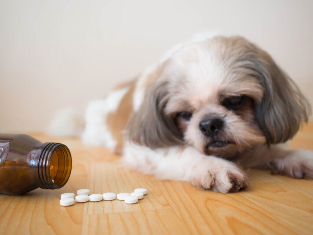 Tramadol pour chien : utilisations et effets secondaires