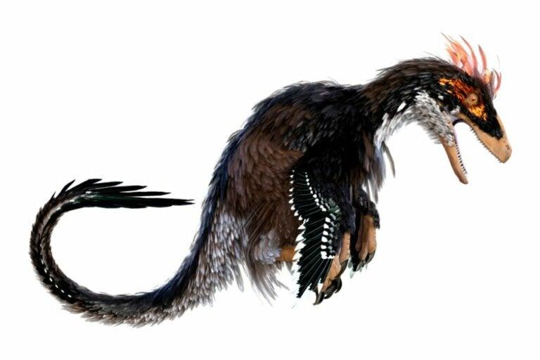 Ubirajara jubatus : le dinosaure qui arborait une crinière