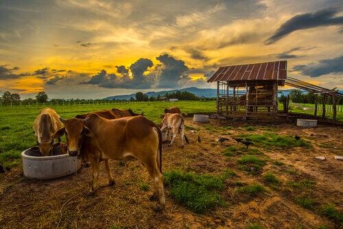 Les animaux qui vivent à la campagne