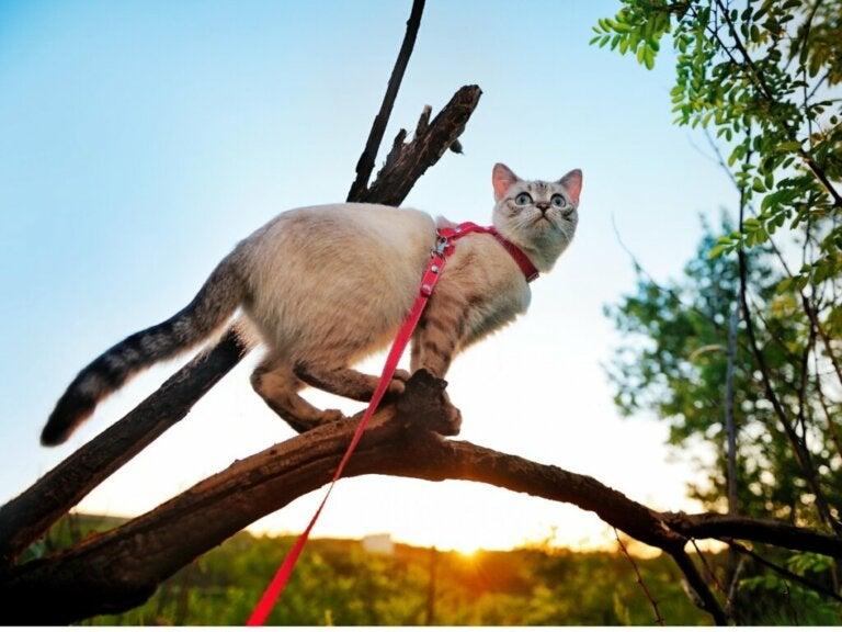 5 conseils pour promener votre chat