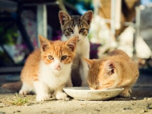 Les soins à prodiguer aux chatons orphelins