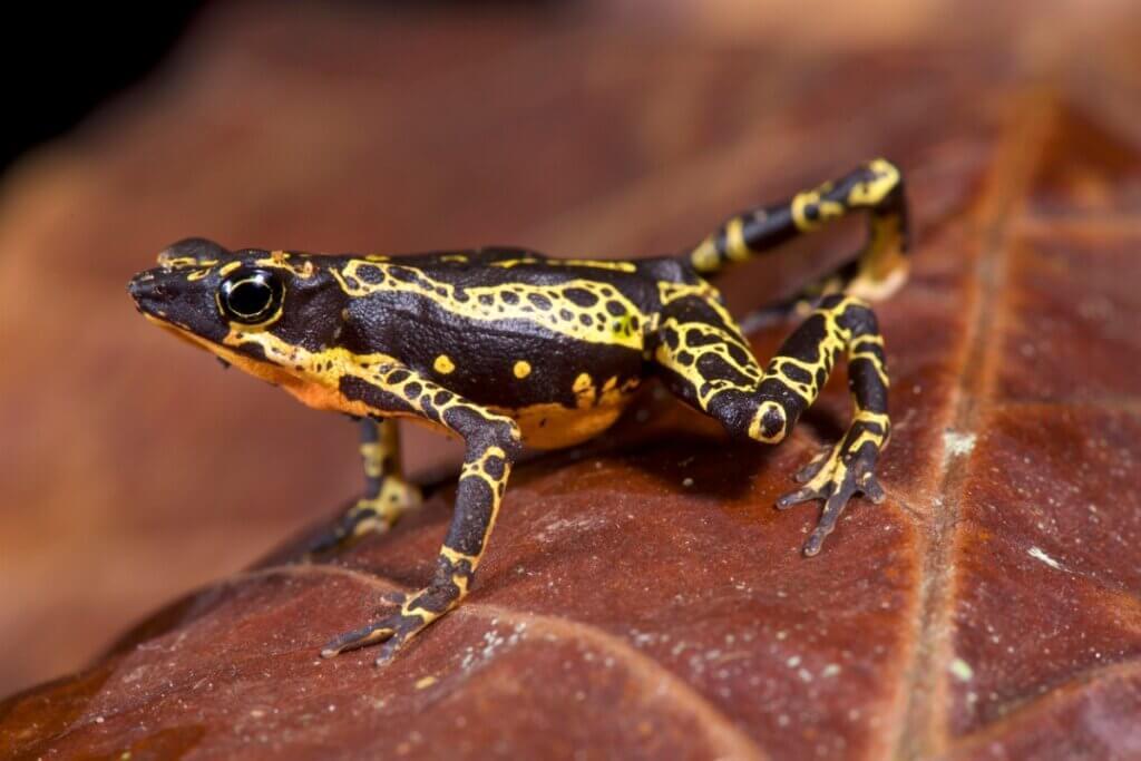 Liste des 25 espèces perdues : la science contre le temps