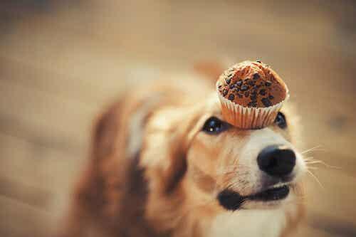 Recette pour chiens : friandises glacées au yaourt et au beurre de cacahuète
