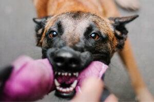 Problèmes de comportement chez le chien : tout ce que vous devez savoir