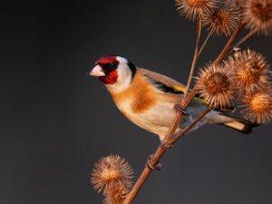 Les 10 oiseaux qui chantent le mieux