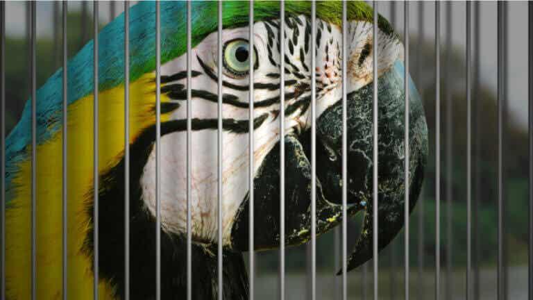 7 oiseaux domestiques en danger d'extinction