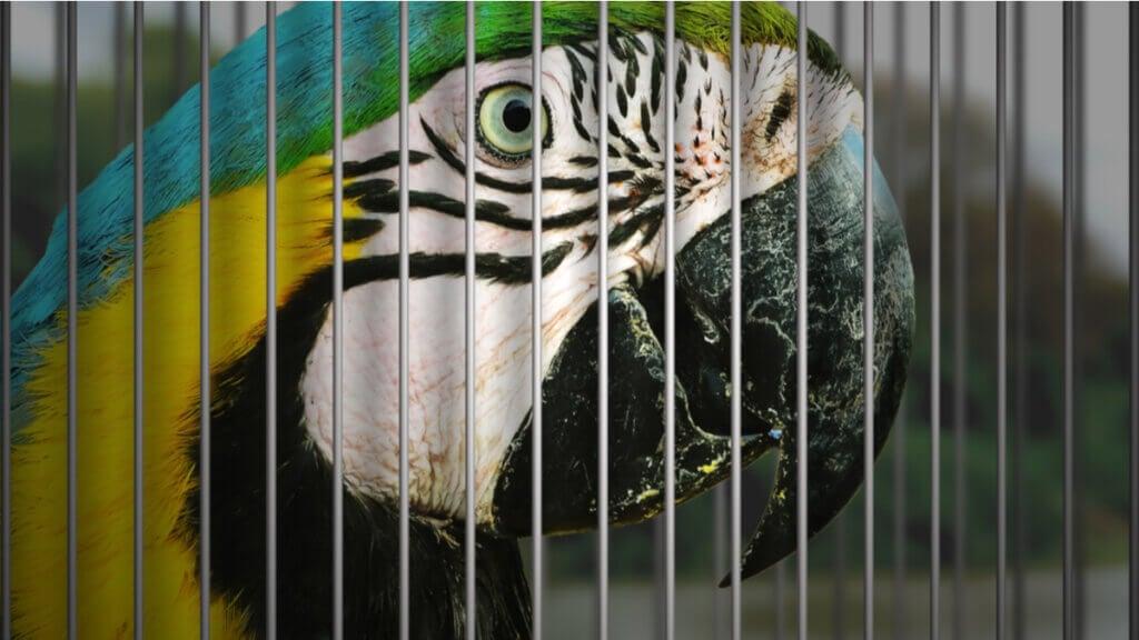 10 oiseaux menacés