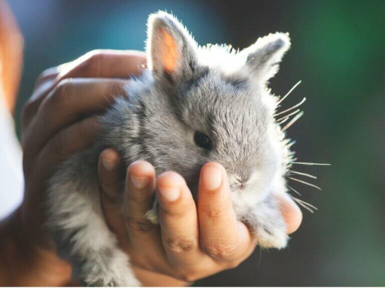 Comment couper les ongles d'un lapin ?