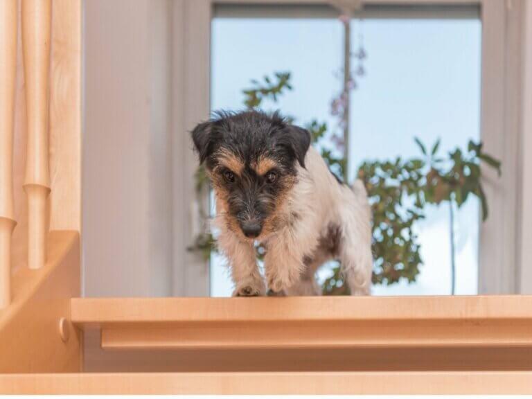 Mon chien a peur des escaliers : pourquoi et comment agir ?