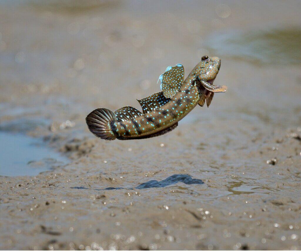 7 poissons qui respirent hors de l'eau