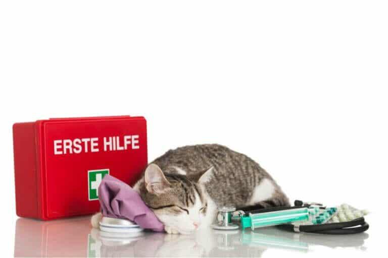 Trousse à pharmacie et premiers secours pour le chat : tout ce qu'il faut savoir