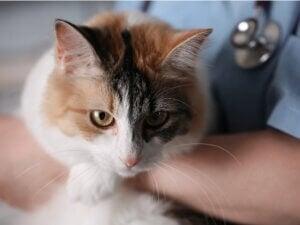 5 cancers courants chez le chat