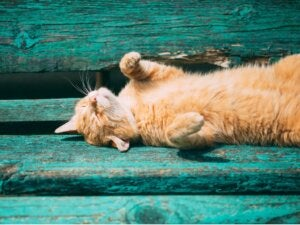 Comment savoir si un chat a chaud ?