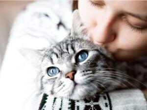 Un maître manque-t-il à son chat ?