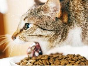Pourquoi mon chat vomit-il après avoir mangé ?