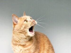 Mon chat vomit de la mousse blanche : pourquoi ?
